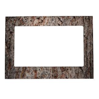 Tronco de árbol imperecedero marcos magneticos