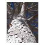 Tronco de árbol membrete