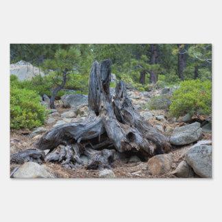 Tronco de árbol secado en el bosque cartel