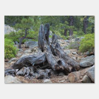 Tronco de árbol secado en el bosque señal