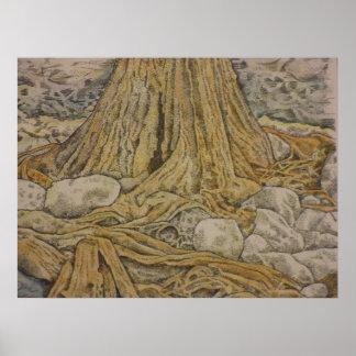tronco del ciprés, país Tejas de la colina Poster
