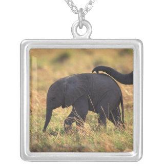 Tronco del descendiente conmovedor del elefante K Grímpola