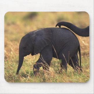 Tronco del descendiente conmovedor del elefante, K Tapete De Raton