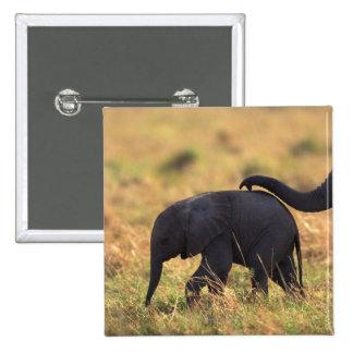 Tronco del descendiente conmovedor del elefante, pin cuadrado