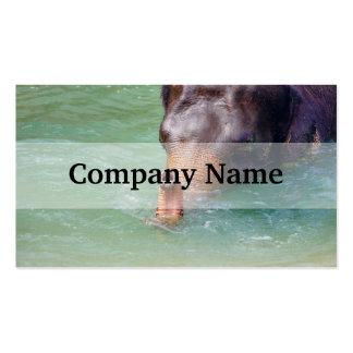 Tronco del elefante para arriba en el agua, plantilla de tarjeta personal