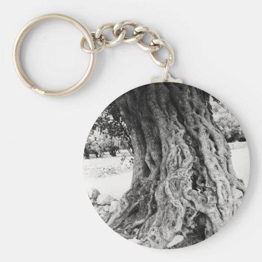 Tronco del olivo antiguo en la fotografía de Greci Llavero Redondo Tipo Pin