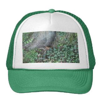 Tronco e hiedra de árbol en bosque