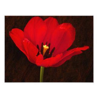 Tronco floral colorido de la flor roja del tulipán fotos