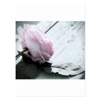 Tronco largo en colores pastel pálido subió en tarjeta postal