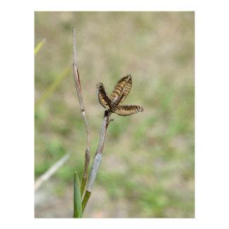 Tronco secado de la flor de la vaina del lirio afr membrete personalizado