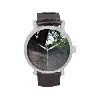 tronco viejo del roble con la regadera relojes de mano