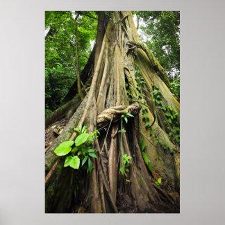 Tronco y raíces de árbol entrelazados con los lian poster