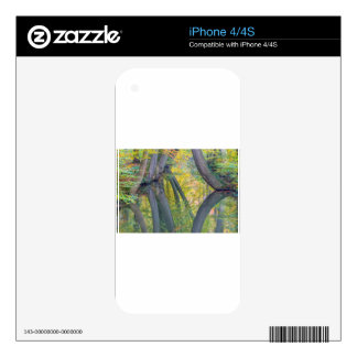 Troncos de árbol de la caída con la reflexión en iPhone 4 calcomanía