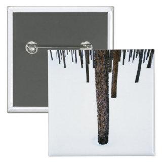 Troncos de árbol en nieve pin