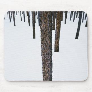 Troncos de árbol en nieve tapetes de raton