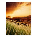 troncos de la precipitación en la puesta del sol tarjetas postales