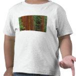Troncos de la secoya gigante en el bosque, camisetas