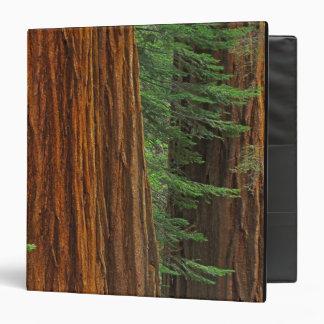 """Troncos de la secoya gigante en el bosque, Yosemit Carpeta 1 1/2"""""""