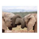 troncos del elefante implicados tarjetas postales
