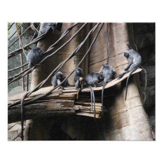 Tropa de plata del mono del Langur con el bebé Arte Con Fotos
