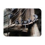 Tropa de plata del mono del Langur con el bebé Imanes Flexibles