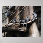 Tropa de plata del mono del Langur con el bebé Posters