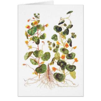 Tropaeolum majus card