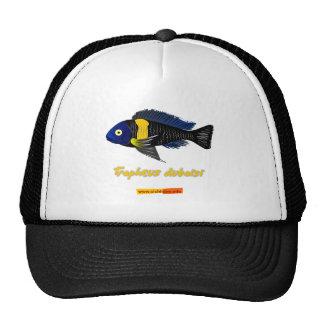 Tropheus duboisi hats