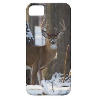 Trophy Buck iPhone 5 Cover