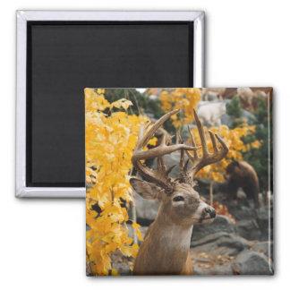Trophy Deer 2 Inch Square Magnet