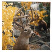 Trophy Deer Ceramic Tile