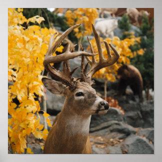 Trophy Deer Poster