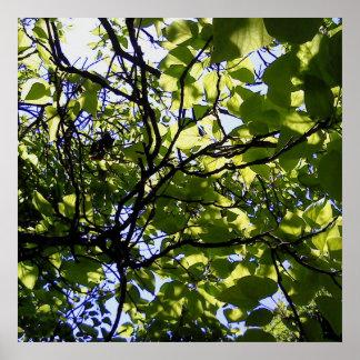 Tropic catalpa tree wild nature poster