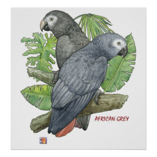 Tropical African Greys Print