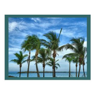 Tropical Afternoon Custom Postcard