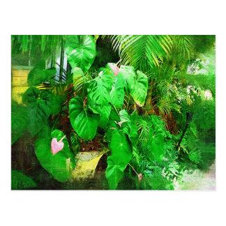 Tropical anthurium - Walk in the Garden Postcard
