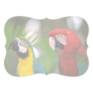 tropical background card