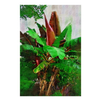 Tropical banana tree foliage - Walk in the Garden Poster
