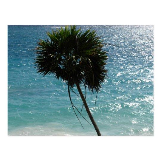 Tropical Beach Palm Tree Postcard