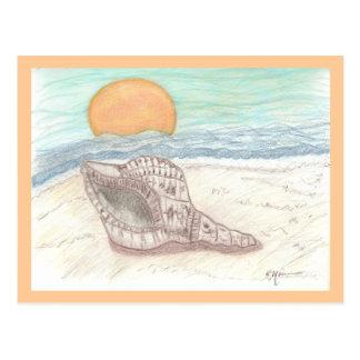 Tropical Beach Sea Shell Postcard