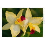 Tropical Beauty - Orchids Cards