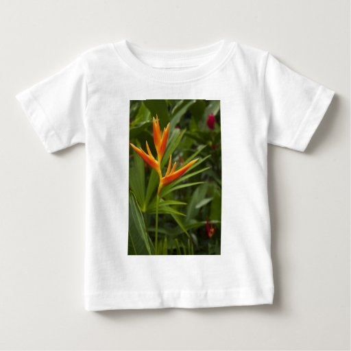 Tropical Beauty Tee Shirt