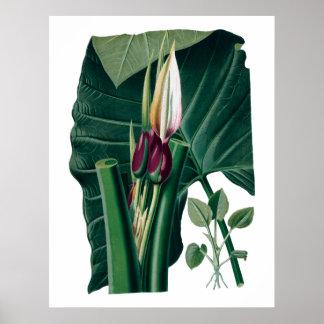 Tropical big leaves botanical print