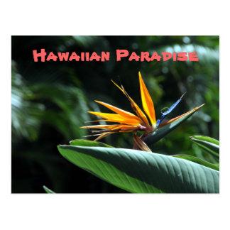Tropical Bird of Paradise Postcard
