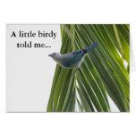 Tropical Bird Picture on Palm Tree Card
