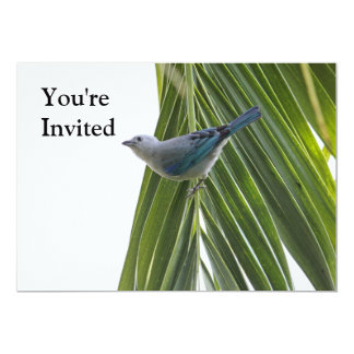 Tropical Bird Picture on Palm Tree Custom Invitations