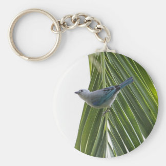 Tropical Bird Picture on Palm Tree Key Chains