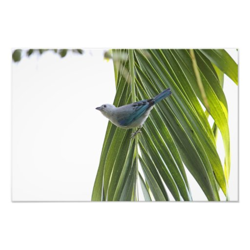 Tropical Bird Picture on Palm Tree Photo Print