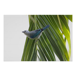 Tropical Bird Picture on Palm Tree Poster