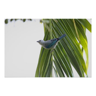 Tropical Bird Picture on Palm Tree Print